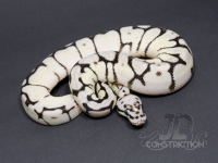 Bumblebelly SK Axanthic