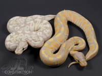 Coralglow SK Axanthic vs Coralglow