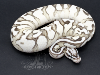 Superfly Enchi SK Axanthic