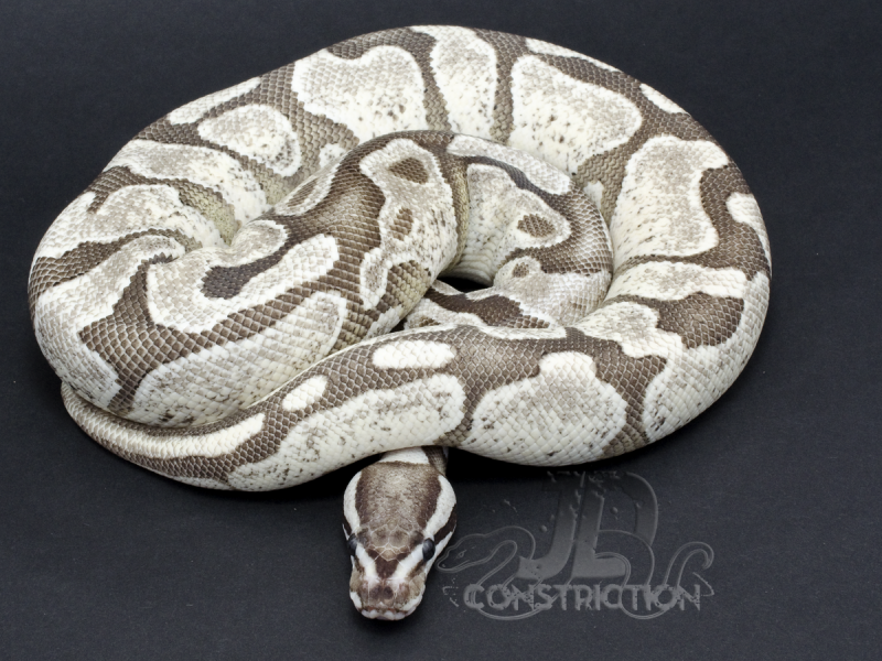 Collection   JD Constriction