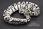 Firefly SK Axanthic