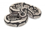 Fire SK Axanthic