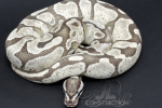 Fire Enchi SK Axanthic
