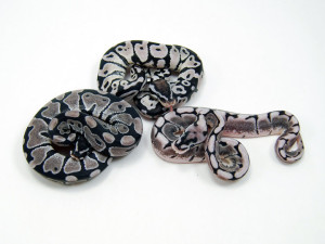 axanthic group